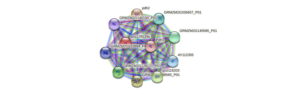 pco128534b protein (Zea mays) - STRING interaction network