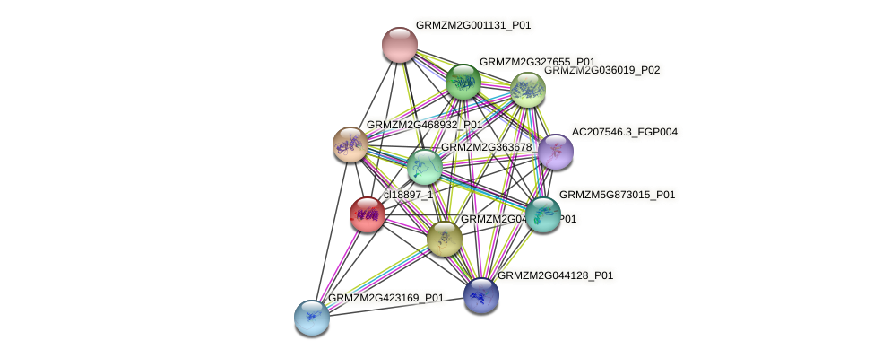 cl18897_1 protein (Zea mays) - STRING interaction network
