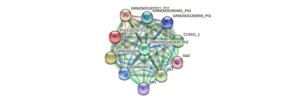 GRMZM2G165383_P01 protein (Zea mays) - STRING interaction network