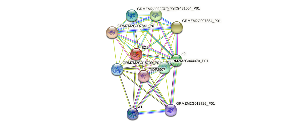 BZ1 protein (Zea mays) - STRING interaction network