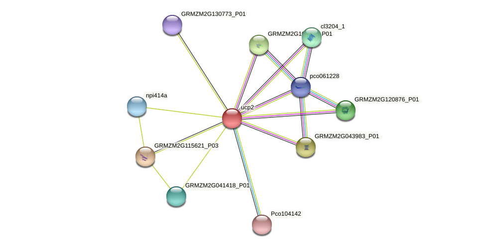 Zm.32210 protein (Zea mays) - STRING interaction network
