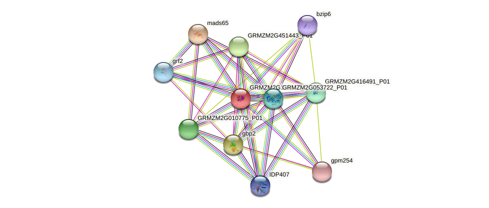 GRMZM2G165679_P01 protein (Zea mays) - STRING interaction network
