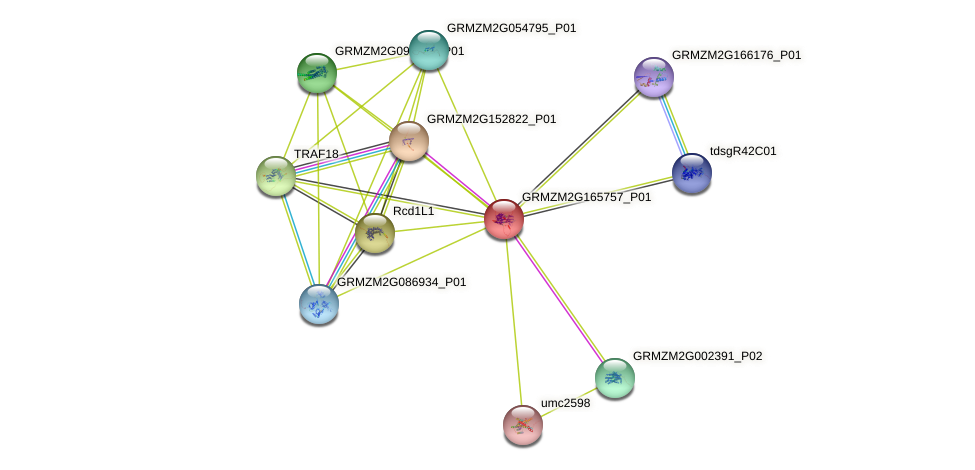 GRMZM2G165757_P01 protein (Zea mays) - STRING interaction network