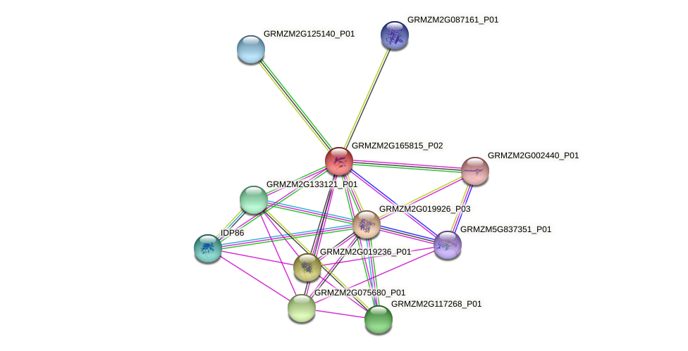 Zm.66621 protein (Zea mays) - STRING interaction network