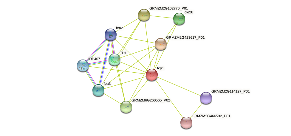 fcp1 protein (Zea mays) - STRING interaction network