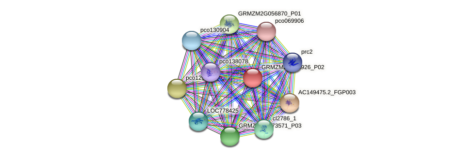 GRMZM2G165926_P02 protein (Zea mays) - STRING interaction network