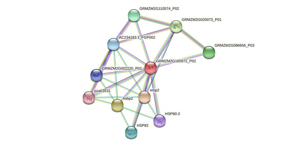 hsf13 protein (Zea mays) - STRING interaction network