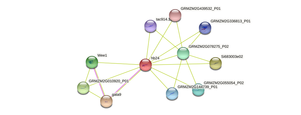 Zm.26201 protein (Zea mays) - STRING interaction network