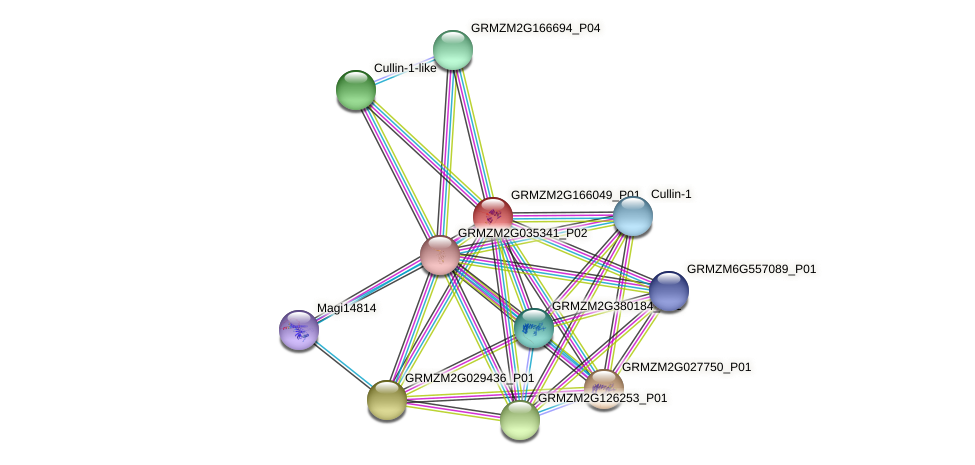 100272712 protein (Zea mays) - STRING interaction network