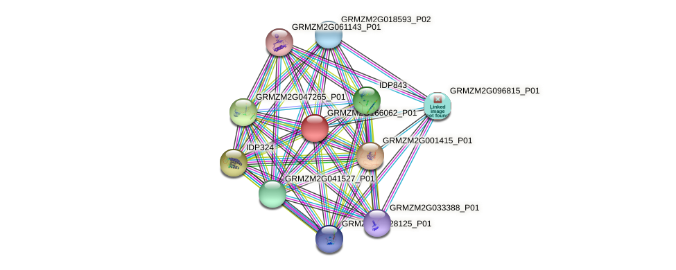 GRMZM2G166062_P01 protein (Zea mays) - STRING interaction network