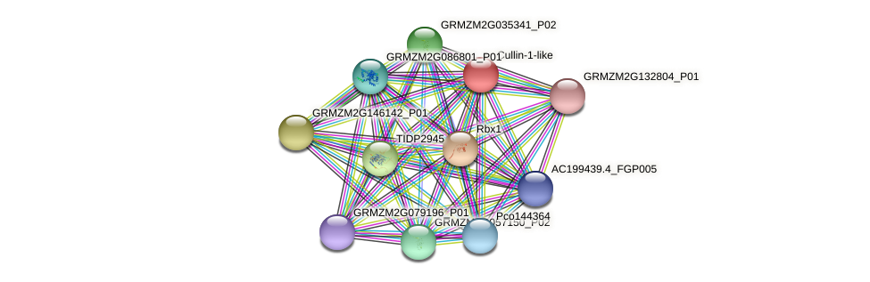 GRMZM2G166089_P05 protein (Zea mays) - STRING interaction network