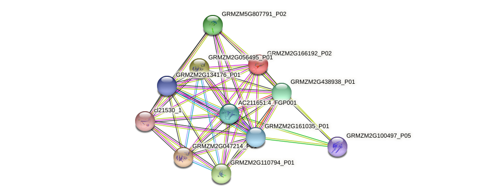GRMZM2G166192_P01 protein (Zea mays) - STRING interaction network