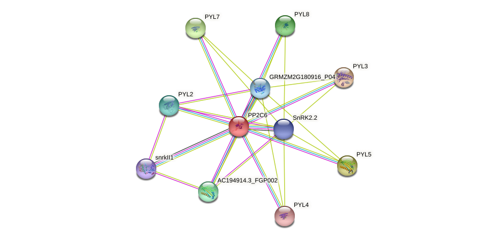 PP2C6 protein (Zea mays) - STRING interaction network