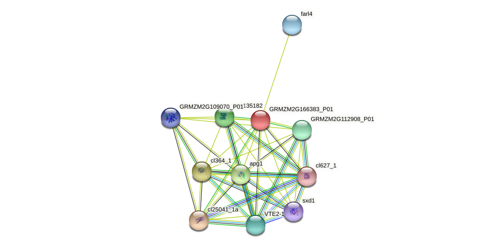 GRMZM2G166383_P01 protein (Zea mays) - STRING interaction network