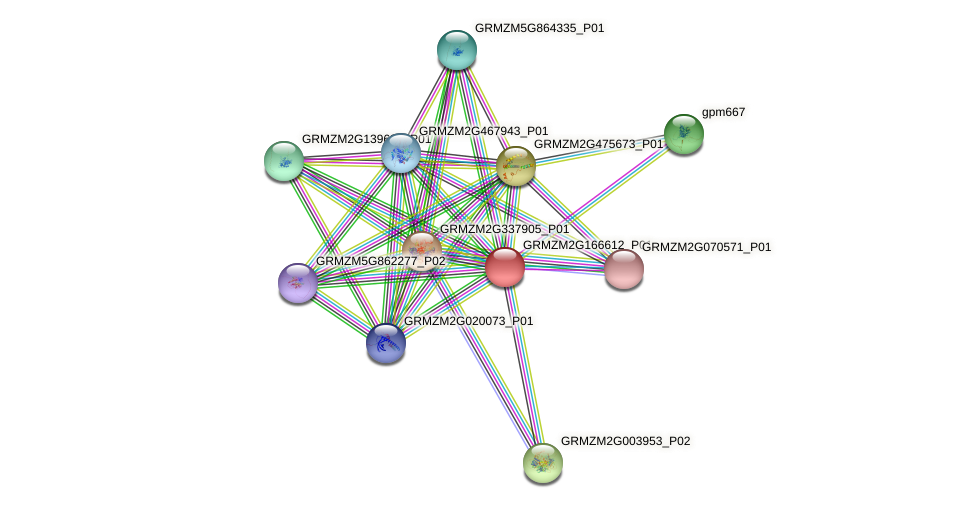 GRMZM2G166612_P01 protein (Zea mays) - STRING interaction network