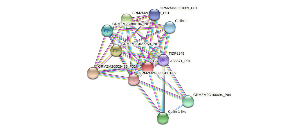 GRMZM2G166671_P01 protein (Zea mays) - STRING interaction network