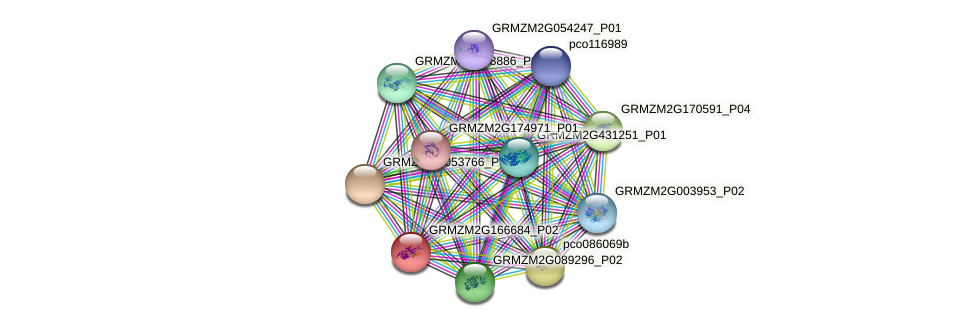 Zm.110075 protein (Zea mays) - STRING interaction network