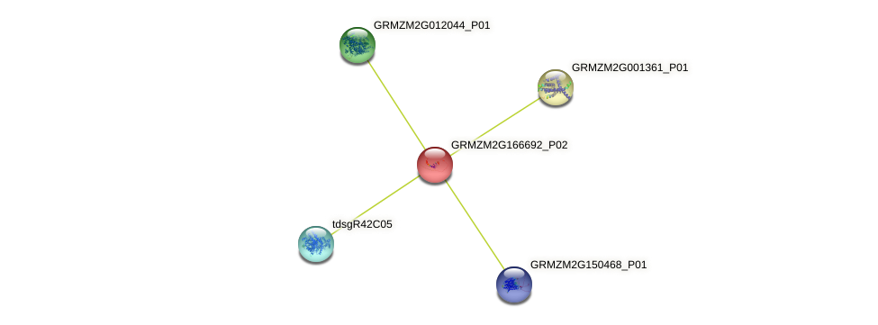 GRMZM2G166692_P02 protein (Zea mays) - STRING interaction network