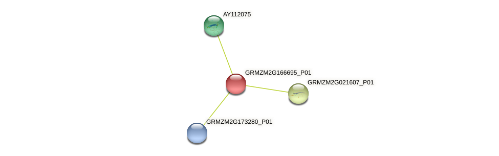 Zm.79579 protein (Zea mays) - STRING interaction network