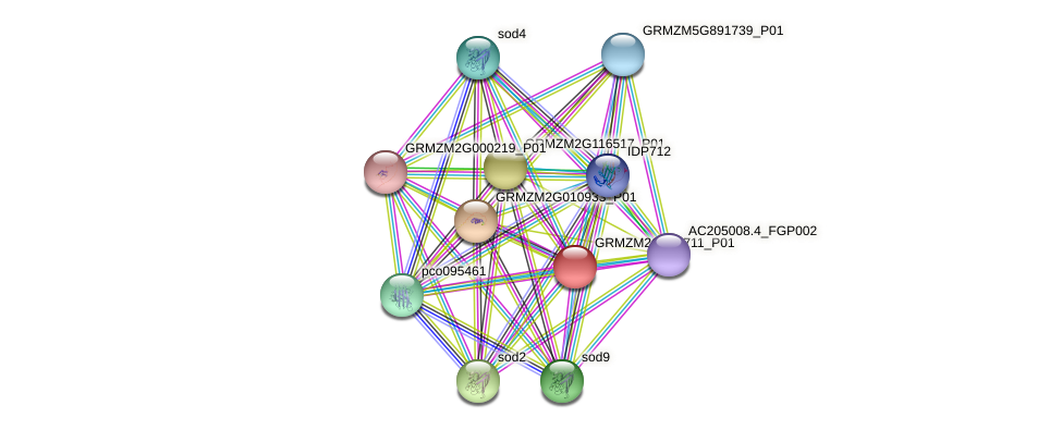 GRMZM2G166711_P01 protein (Zea mays) - STRING interaction network