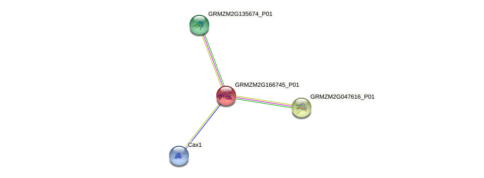 103651657 protein (Zea mays) - STRING interaction network