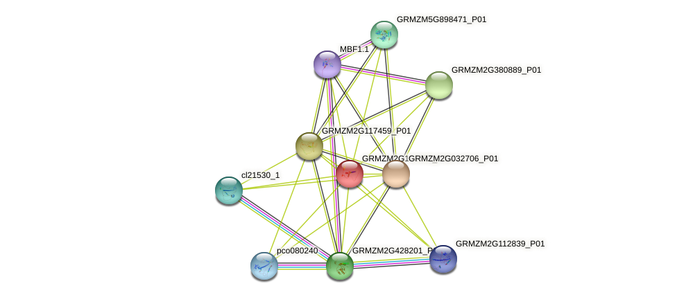 GRMZM2G166776_P01 protein (Zea mays) - STRING interaction network