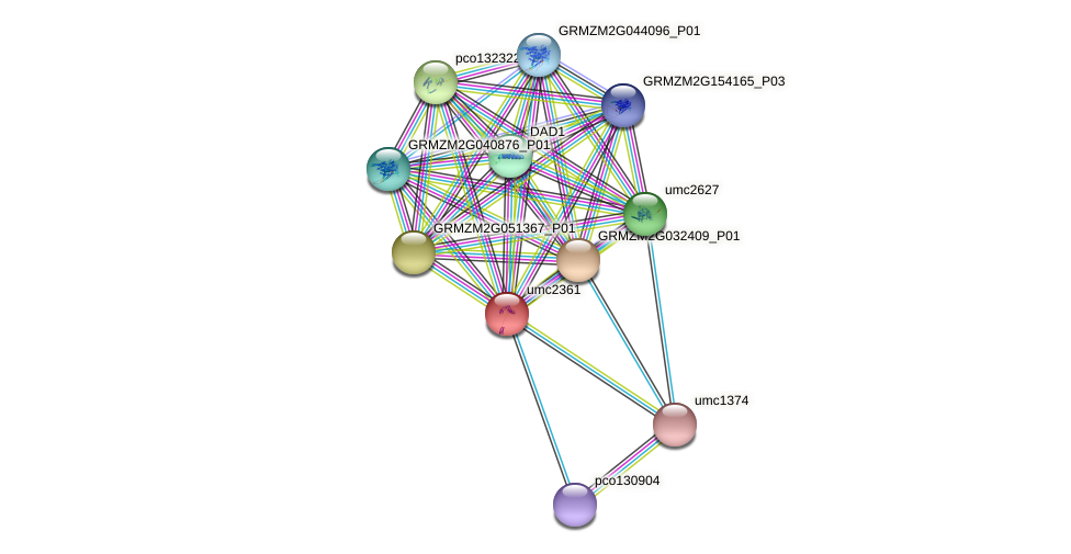 umc2361 protein (Zea mays) - STRING interaction network