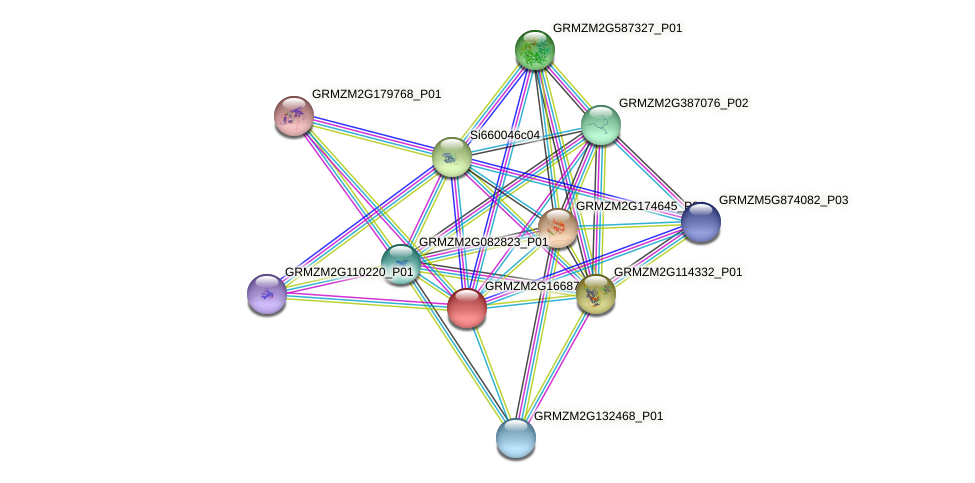 GRMZM2G166870_P01 protein (Zea mays) - STRING interaction network