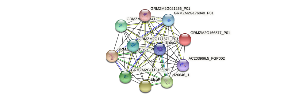 Zm.87584 protein (Zea mays) - STRING interaction network