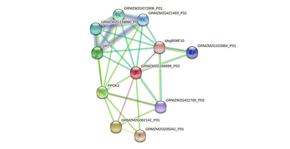 GRMZM2G166899_P02 protein (Zea mays) - STRING interaction network