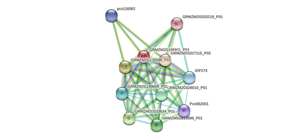 GRMZM2G166931_P01 protein (Zea mays) - STRING interaction network