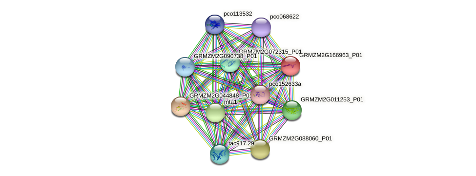 GRMZM2G166963_P01 protein (Zea mays) - STRING interaction network