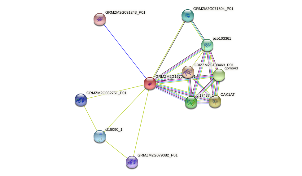 GRMZM2G167014_P01 protein (Zea mays) - STRING interaction network