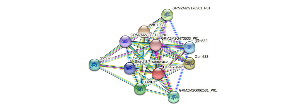 GRMZM2G167085_P01 protein (Zea mays) - STRING interaction network