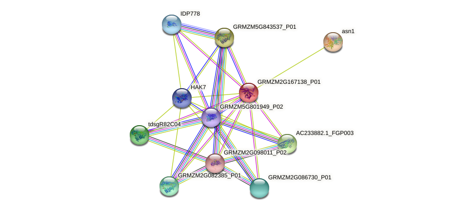 Zm.43012 protein (Zea mays) - STRING interaction network