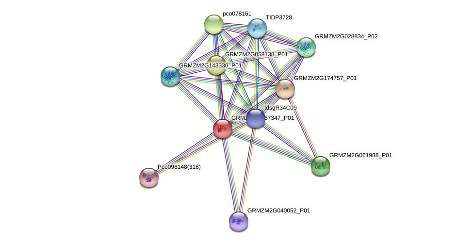 GRMZM2G167347_P01 protein (Zea mays) - STRING interaction network