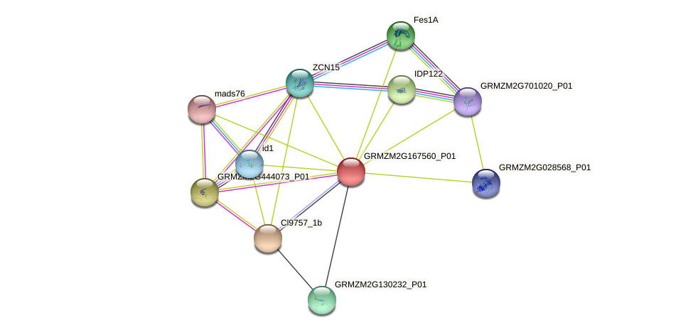COL14 protein (Zea mays) - STRING interaction network