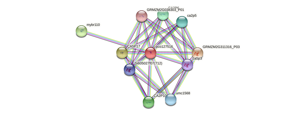pco127516 protein (Zea mays) - STRING interaction network