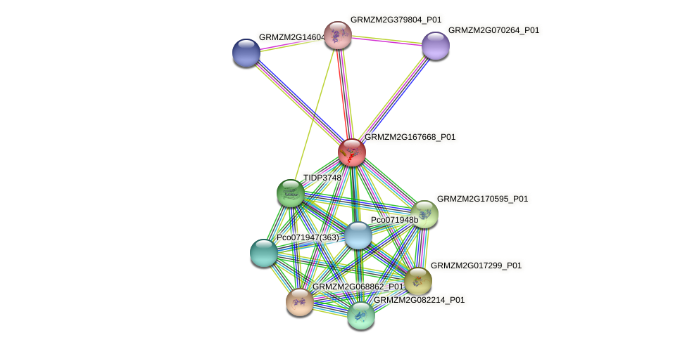 GRMZM2G167668_P01 protein (Zea mays) - STRING interaction network