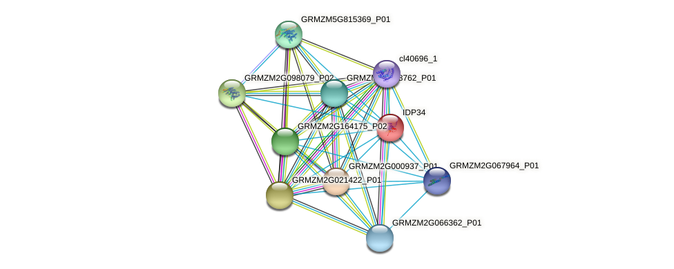 IDP34 protein (Zea mays) - STRING interaction network
