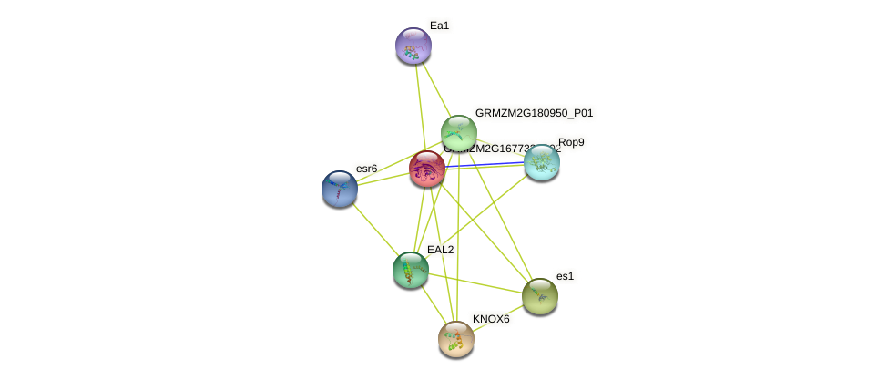 Zm.14528 protein (Zea mays) - STRING interaction network
