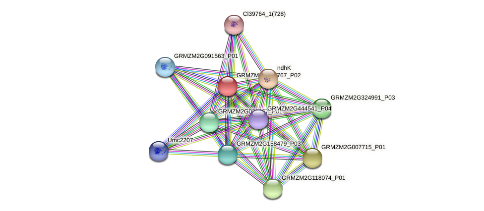 GRMZM2G167767_P01 protein (Zea mays) - STRING interaction network