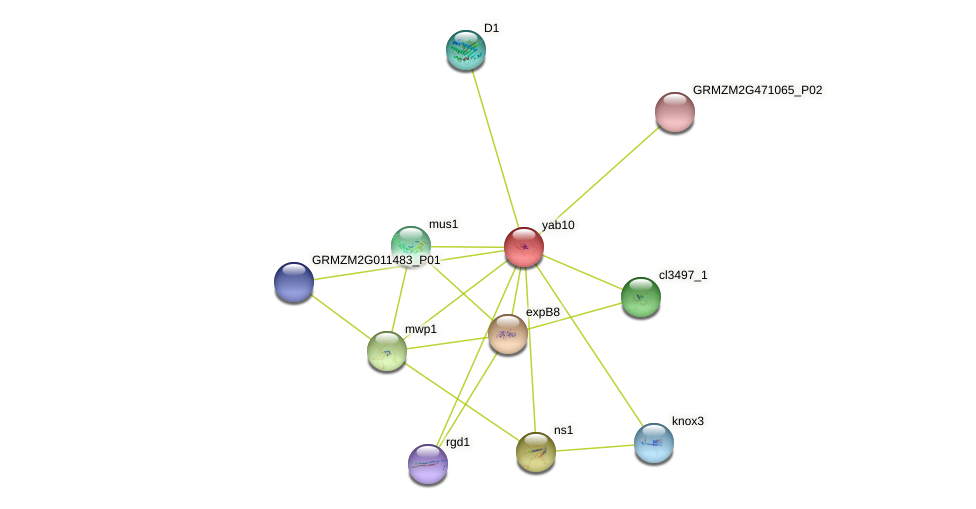 yab10 protein (Zea mays) - STRING interaction network
