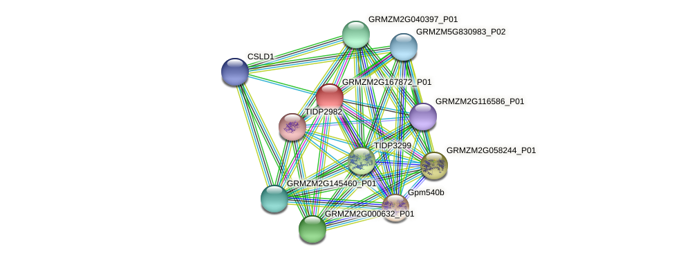 GRMZM2G167872_P01 protein (Zea mays) - STRING interaction network