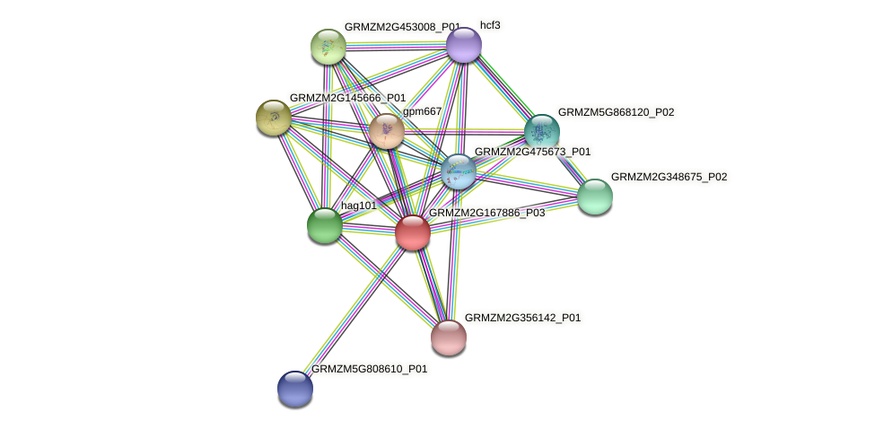 GRMZM2G167886_P03 protein (Zea mays) - STRING interaction network