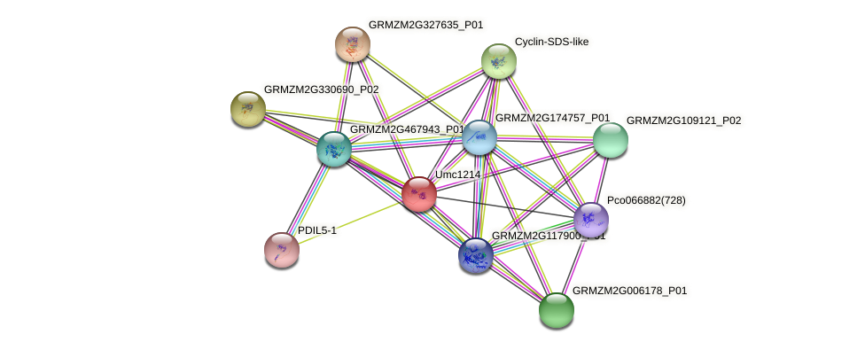 Zm.13366 protein (Zea mays) - STRING interaction network