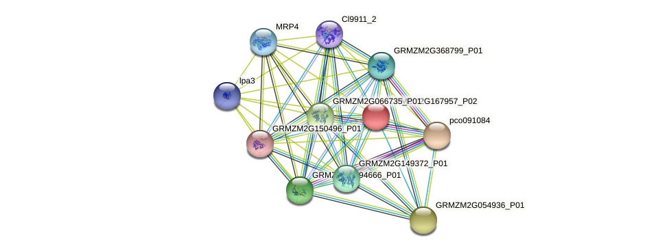 GRMZM2G167957_P02 protein (Zea mays) - STRING interaction network