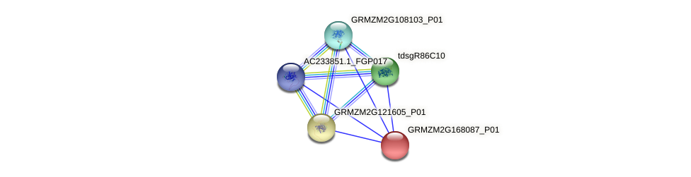 GRMZM2G168087_P01 protein (Zea mays) - STRING interaction network