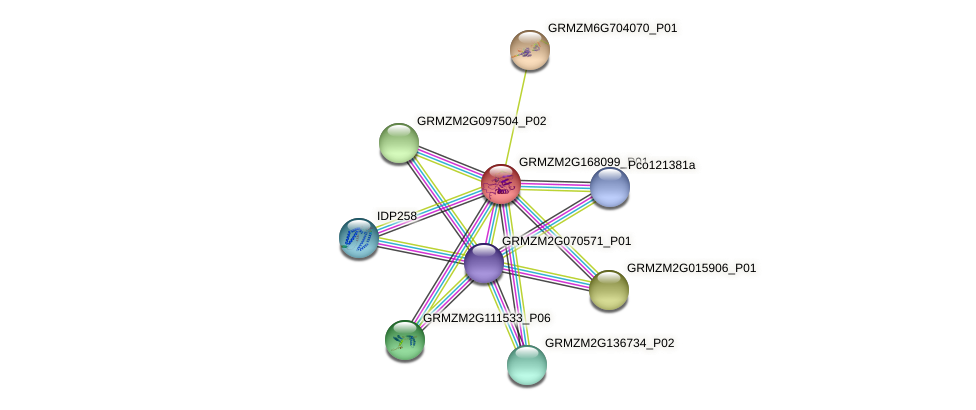 GRMZM2G168099_P01 protein (Zea mays) - STRING interaction network