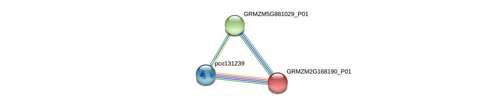GRMZM2G168190_P01 protein (Zea mays) - STRING interaction network